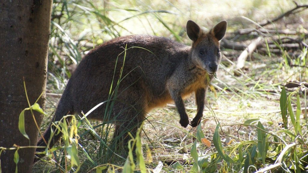 Southern Australian Nature Parks to Receive Tourism Fund